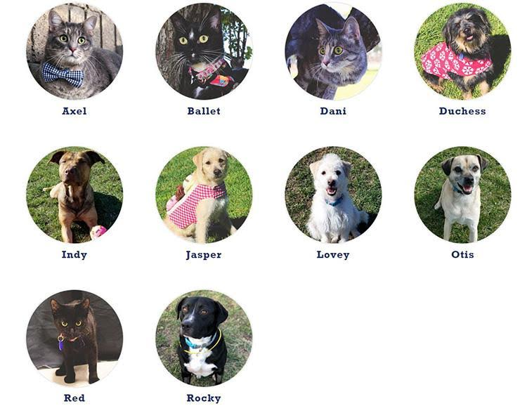 Six dogs and three kittens are going to be up for adoption on Sunday, May 29.
