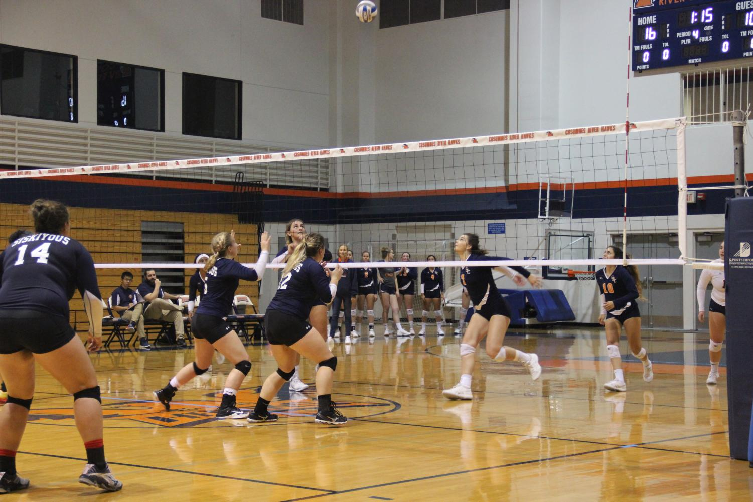 Freshman middle blocker Taryn Oberle sets up for a kill. Oberle is one of seven freshman who bring new talent and promise to the team.