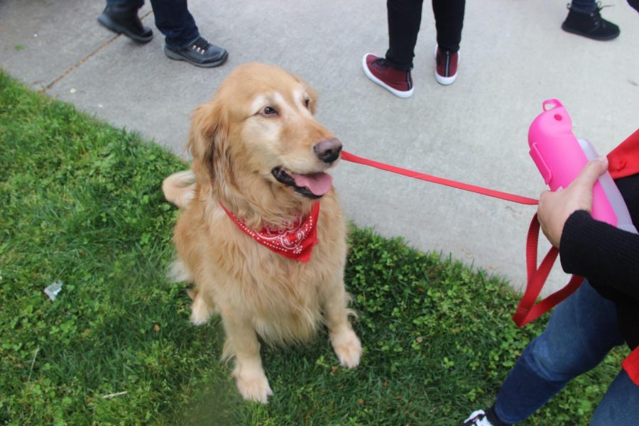Therapy dogs were on campus April 3 to help relieve stress amongst students and faculty.